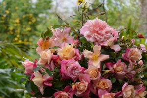 Heritage Roses 1
